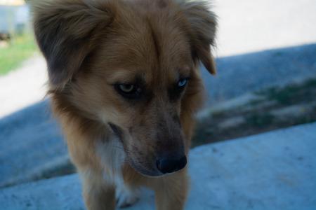 stray: Special stray dog