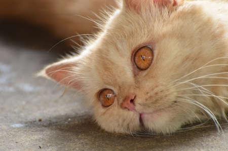 introspective: Cat sleep