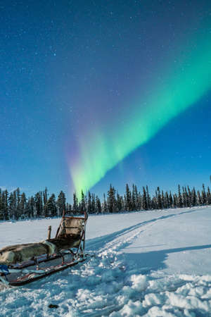 View to winter forest and sled under starry night with Polar light LANG_EVOIMAGES