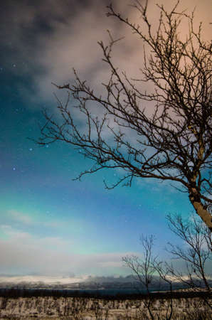 View to leafless tree and snowy nature in winter forest at night LANG_EVOIMAGES