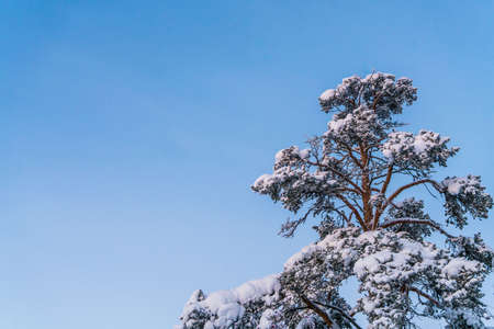 Tree covered with snow LANG_EVOIMAGES