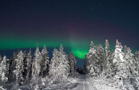 View to cold winter forest and snowy road at night with Polar light
