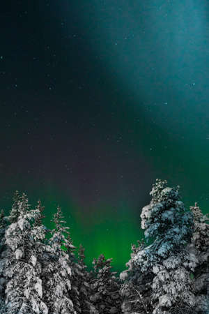 View to woods covered with snow under sky with Polar light