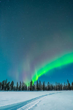 Winter woods and polar light