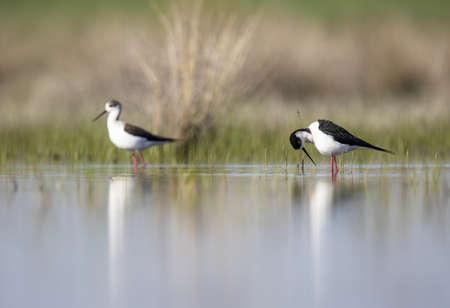 Wild bird walking on water LANG_EVOIMAGES