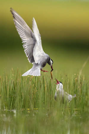 Wild bird with eating in beak on grass