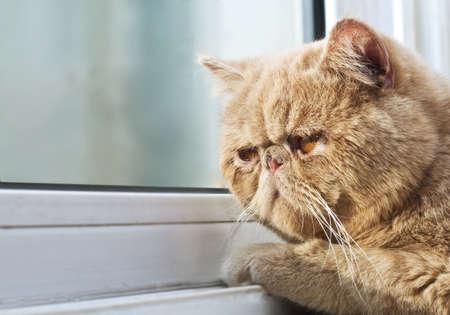 Bir EBM kedi çekim portre fotoğraf bir pencereden bakan