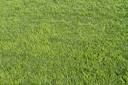fresh lawn grass  Stock Photo