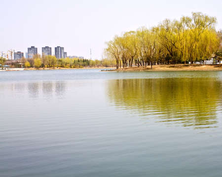 City park beside the lake, green trees in it with reflections and everything seems tranquil
