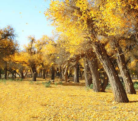 Golen düşmüş yaprak ve ağaç manzara fotoğrafı