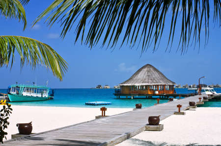 Landscape photo of Coconut trees and couches on white sand beach with blue sky Editorial