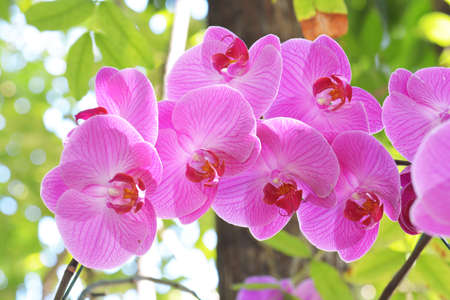 red orchid: Bouquet of pink flowers orchids