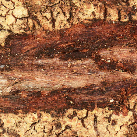 on the surface: Chipped tree bark surface