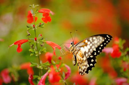 tropical garden: Butterfly in the nature tropical garden Stock Photo