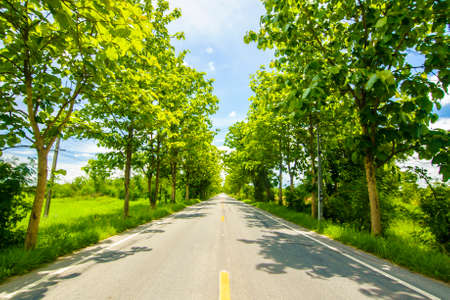both sides: road with trees on both sides