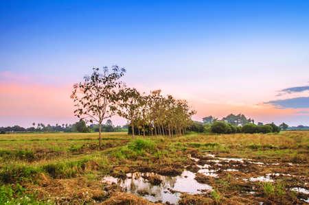 countryside landscape: Landscape countryside with twilight sky Stock Photo