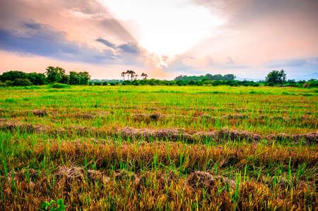 Landscape of field stubble and sunset sky