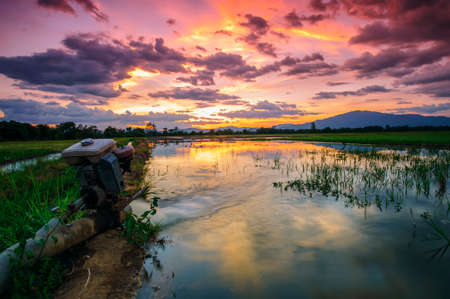 Landscaping of natural areas to grow agricultural peaches in the evening after sunset. Stock fotó