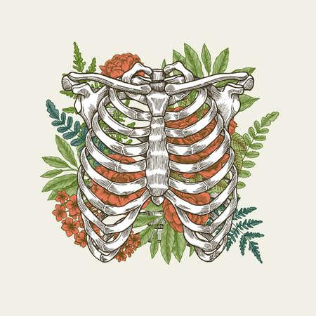 Illustrazione d'annata floreale di vettore dell'illustrazione della gabbia toracica Archivio Fotografico - 87516197