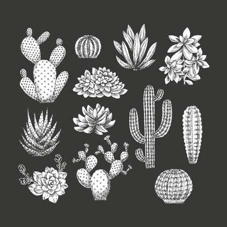 Cactus collectie. Schetsmatige stijl illustratie. Succulente set. Vector illustratie