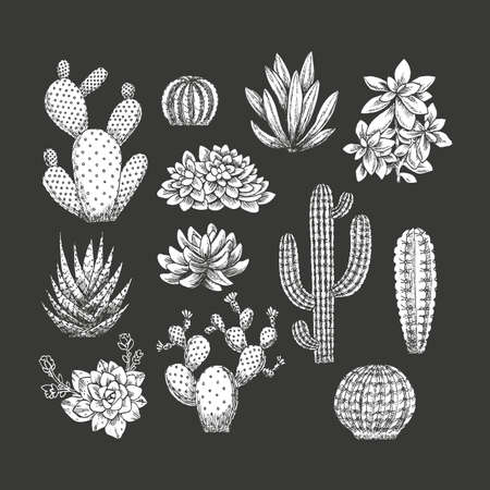 Cactus collection. Sketchy style illustration. Succulent set. Vector illustration
