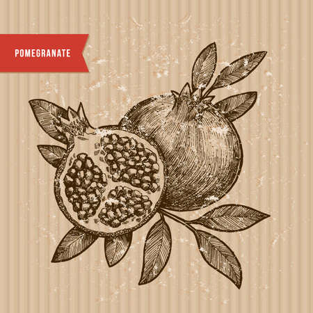 Pomegranate illustration. Vintage Engraved style illustration. Vector illustration