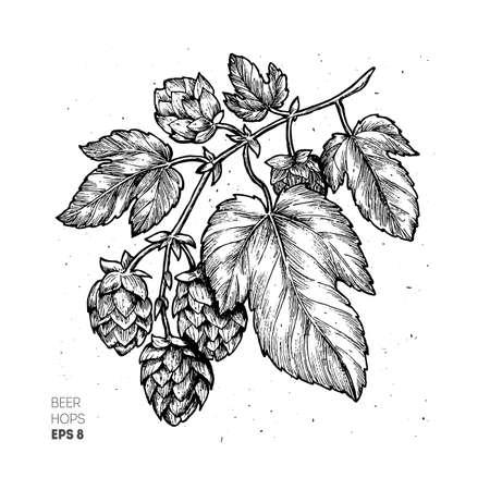 ビールのホップのイラスト。刻まれたスタイルの図。ビンテージ ビールのデザイン。ベクトル図