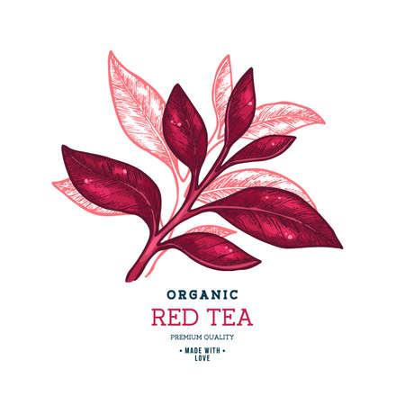 Tea leaf design template. Engraved leaf logotype. Vector illustration