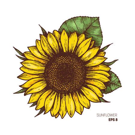 Girasol vintage grabado ilustración. Girasol aislado Ilustración vectorial Foto de archivo - 87877150