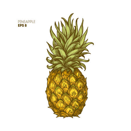 Colored pineapple illustration. Vintage tropical fruit. Vector illustration Фото со стока - 87877052