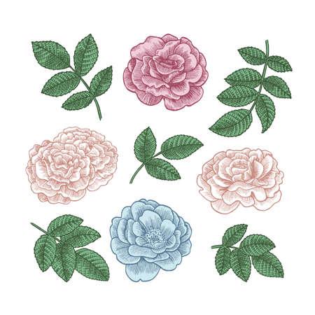 Flowers and leaves collection. Vintage floral set. Vector illustration