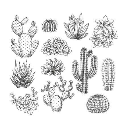 cactus succulent ensemble collection collection de style sketchy