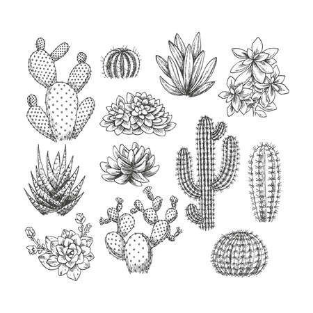 Cactus Succulent set collection Sketchy style illustration. Иллюстрация
