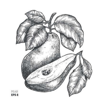 ナシ果実のイラスト。刻まれたスタイルの図。ベクトル図