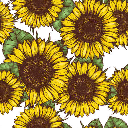 Sunflower seamless pattern. Sunflower fabric background. Vector illustration Фото со стока - 88335846