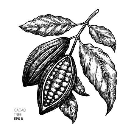Illustrazione di fagioli di cacao. Illustrazione di stile inciso. Fagioli di cacao al cioccolato. Illustrazione vettoriale