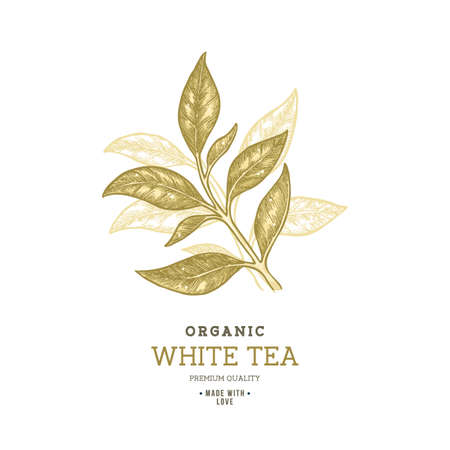 Tea leaf design template. Engraved leaf logotype. Vector illustration