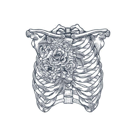 解剖学のビンテージ イラストを入れ墨。バラ胸部スケルトン。ベクトル図