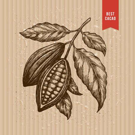 Cocoa beans tree illustration. Engraved style illustration.