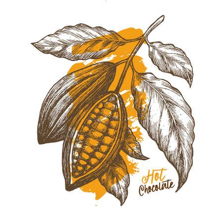 カカオ豆。刻まれたスタイルの図。チョコレートのカカオ豆。ベクトル図