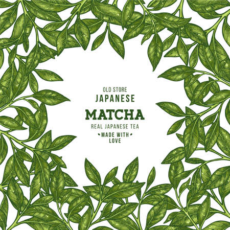 Green tea leaf frame. Engraved leaf design template. Vector illustration