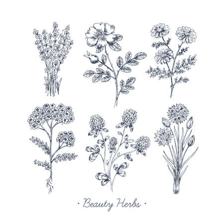 Hand Drawn of Vintage Beauty Herbs Set Imagens - 94493382