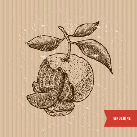 Tangerine illustration engraved style vector illustration. Stock Vector - 95162259