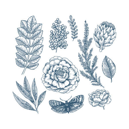 Hand drawn plant and flower collection. Vintage engraved flower set. Vector illustration Ilustracja