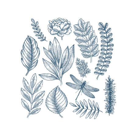 Hand drawn plant and flower collection. Vintage engraved flower set. Vector illustration. Çizim