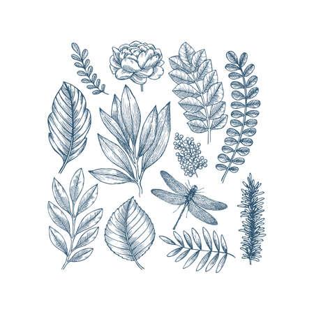 Hand drawn plant and flower collection. Vintage engraved flower set. Vector illustration. Illustration