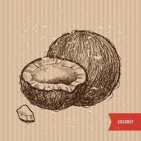 Sketch style coconut illustration. Vintage coconut on a cardboard background. Vector illustration