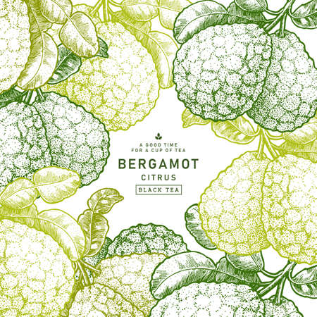 Fresh bergamot design template. Engraved style illustration. Kaffir lime frame. Vector illustration
