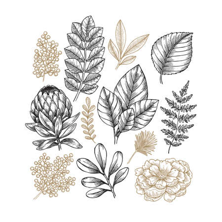 Hand drawn plant and flower collection. Vintage engraved flower set Vector illustration