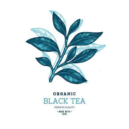 Tea leaf design template. Engraved leaf logotype. Vector illustration.